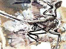 Ķīnā atrasti četrspārnaini dinozauri