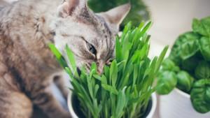 5 vērtīgi augi, ko aprīlī audzēt uz palodzes