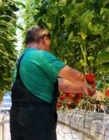 Vidējā mēneša alga «uz papīra» šogad pieaugusi līdz € 785