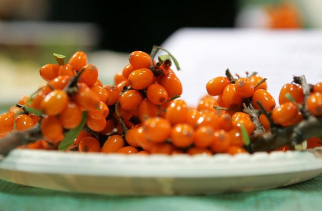 Smiltsērkšķi 14. starptautiskās pārtikas industrijas izstādes ''Riga Food 2009'' atklāšanā Starptautiskajā izstāžu centrā ''Ķīpsala''