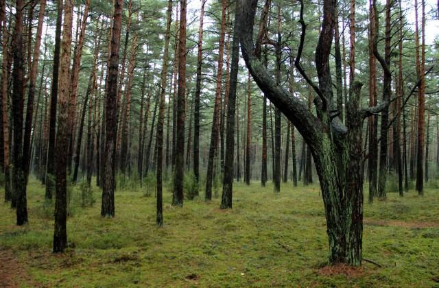 Mangaļsalas mežs