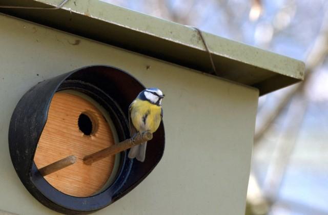 Vācijā fotoradara kaste pārveidota par putnu būrīti