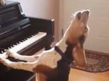 Šis video ar dziedošu bīglu uzlabos tavu dienu