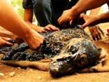 Aizkustinoši: divas dienas cenšas glābt darvā izmērcētu sunīti