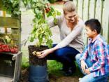 Eksotiski augi, kurus vari izaudzēt savā dārzā. TOP 5