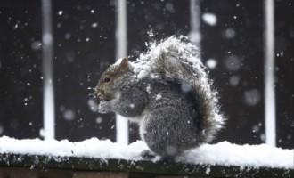 Līdz Lieldienām vietām varētu izveidoties neliela sniega kārtiņa