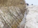 Kaugurciema pludmalē iestāda kārklus