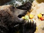 Karstuma dēļ savvaļas dzīvniekiem dod īpašus saldējumus