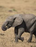 Smieklīgi! Dusmīgs ziloņu mazulis