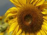 Maija sākums būs pārsvarā saulains