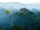 Hondurasas džungļos atrod senas civilizācijas pilsētas drupas