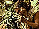 Saeima noraida iniciatīvu par marihuānas dekriminalizāciju