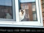 Sieviete izkrīt pa piektā stāva logu