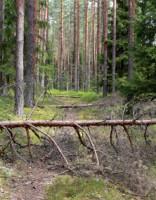 Glābēji palīdz izkļūt no meža četriem jauniešiem