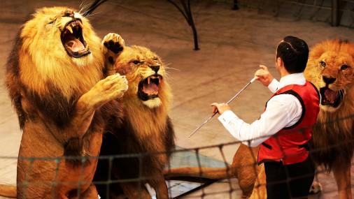 Lipinska: «Rīgas cirkam svītra pāri». Dzīvnieku aizstāvji gavilē