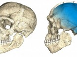"""Marokā atrastas senākās """"homo sapiens"""" fosilijas"""