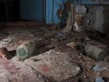 Животные, которые обитают в Чернобыле