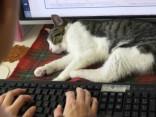 Коты в офиссе Токио отдыхают на столах
