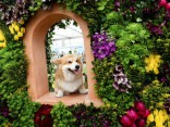 Красочное цветочное шоу в Челси