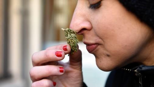 Urugvajā sāk tirgot marihuānu
