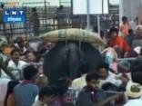 Svētku dalībnieku pūlī ieskrējis zilonis