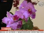 В Риге открылась выставка орхидей