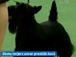 Suņu šovā Ņujorkā triumfē skotu terjers