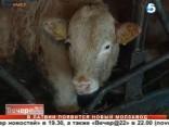 В Латвии появится новый молокозавод