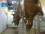 Atkal karstas diskusijas par Halal gaļas ražošanu