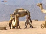 Ēģiptē izmisīgi cīnās par tūrisma nozares atveseļošanos