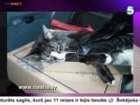 В Берги мужчина застрелил кота на глазах у хозяев