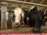 Trikātas kooperatīva zemnieki gaida piena naudu 2015.08.01