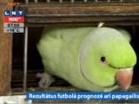Rezultātus futbolā prognozē arī papagailis