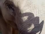 Patiesa draudzība starp cilvēku un ziloni