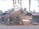 Satrakojies zilonis posta ciematu Indijā