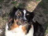 Kalifornijā izglabts suns ar diviem deguniem