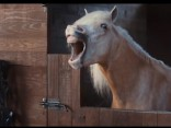 Volkswagen radījuši reklāmu par kuru pat zirgam jāsmejas