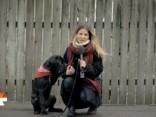 Kinologs: Nekādā gadījumā salūta laikā neatstājiet suni vienu pašu