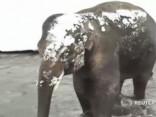 Mīlīgi: ziloņi un citi zvēri ASV izbauda ziemas priekus