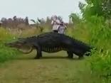 Dabas parka apmeklētājus pārbiedē gigantisks aligators