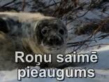 Noskaties: Rīgas Zooloģiskajā dārzā piedzimis ronēns