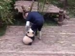 Маленькая панда-прилипала развеселила Сеть