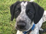 Jaunzēlandes policija nošāvusi suni, kurš kavējis izejošos lidojumus
