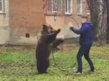 Полиция ищет жителя, гулявшего по городу с медведем на поводке