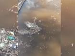 Cūkotāji piecūko Braslas ezera apkārtni