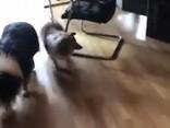 Переполох в РД: в гости пришли четыре собаки