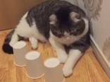 Ленивый кот, которого нельзя обыграть в наперстки