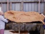 Austrālijā atrasts lielākais dinozaura pēdas nospiedums