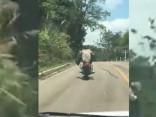 Noskaties: nekaunīga čūska uzbrūk motociklistam