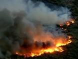 """Arizonas ugunsdzēsēji cīnās ar """"kaktusveida ugunsgrēku"""""""